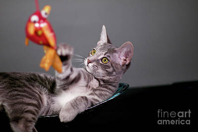 Photograph - The Cat And The Fish by Afrodita Ellerman