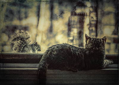 Photograph - The Cat And The Squirrel by Bob Orsillo
