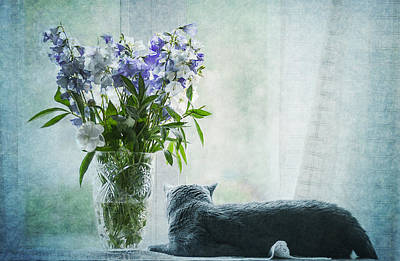 Laying Down Photograph - The Cat And The Vase by Maggie Terlecki