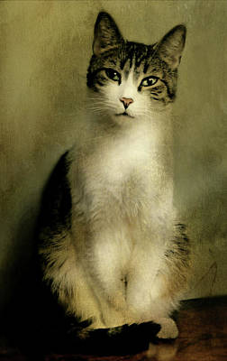 Gray Tabby Photograph - The Cat by Diana Angstadt