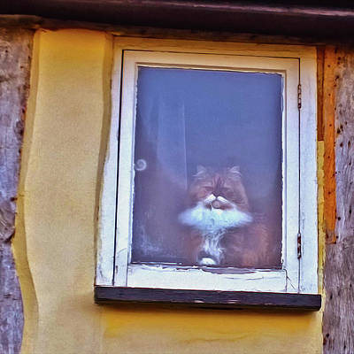 Photograph - The Cat In The Window by Anne Kotan
