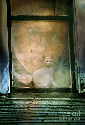 Photograph - The Cat In The Window by Craig J Satterlee