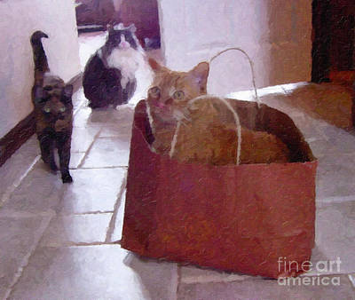 Photograph - The Cat Is In The Bag by Donna L Munro
