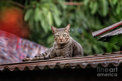 Photograph - The Cat On The Roof by Michelle Meenawong