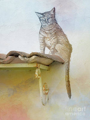 Photograph - The Cat On The Roof Mural by Heiko Koehrer-Wagner
