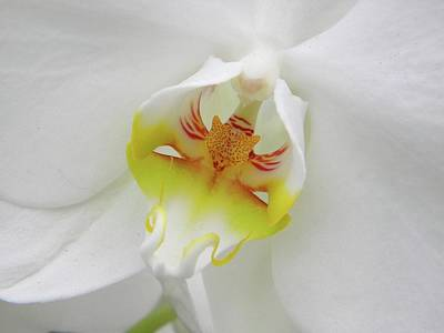 Art Print featuring the photograph The Cat Side Of An Orchid by Manuela Constantin