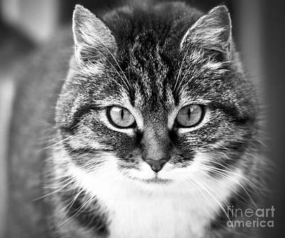 Photograph - The Cat Stare Down by Jesse Watrous