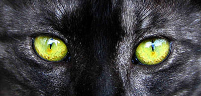 The Cat's Eyes Horizontal Print by David Lee Thompson