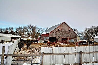 Photograph - The Cattle Lot by Bonfire Photography