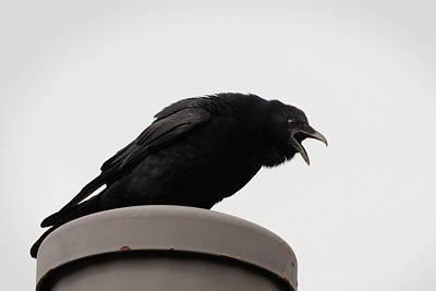 Baltimore Photograph - The Caw by Benjamin DeHaven