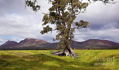 Art Print featuring the photograph The Cazneaux Tree by Bill Robinson