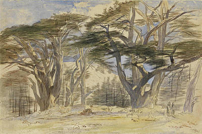 Drawing - The Cedars Of Lebanon by Edward Lear