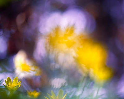 Photograph - The Celandine by Sarah-fiona Helme
