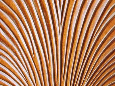 The Chair II Art Print