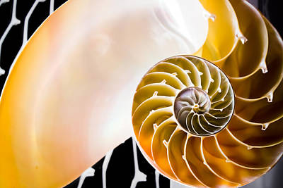 The Chambered Nautilus Art Print