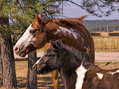 Photograph - The Champion And Jellybean by Alana Thrower