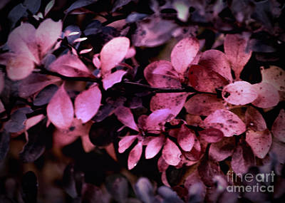 Photograph - The Changing Of The Seasons by Sherry Hallemeier