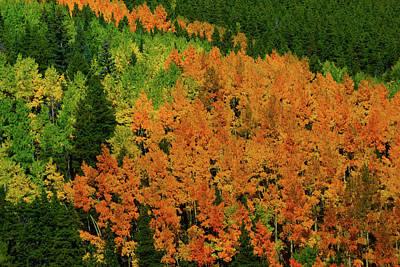 Photograph - The Changing Season by John De Bord