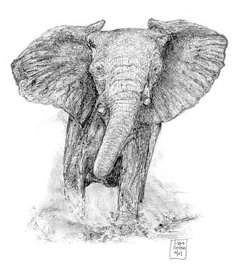 Elephant Pencil Drawing Drawing - The Charge by Lucien Van Oosten