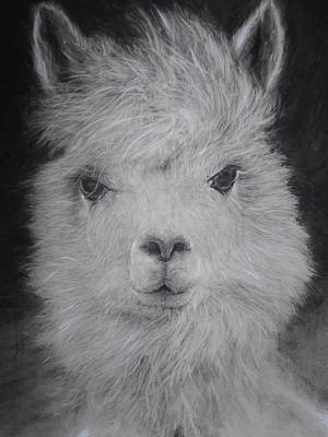 The Charming Llama Art Print by Adrienne Martino