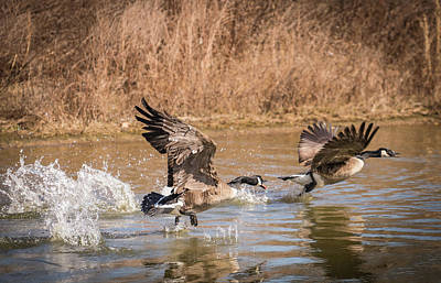 Photograph - The Chase by Bruce Pritchett