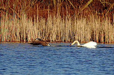 Photograph - The Chase Is On by Debbie Oppermann