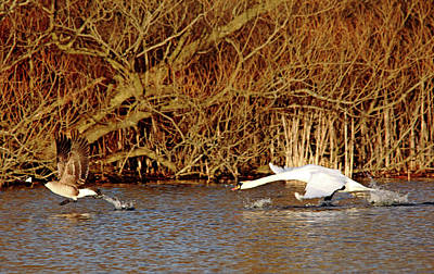 Photograph - The Chase Is On I by Debbie Oppermann