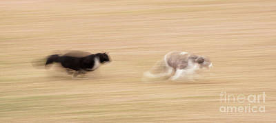 Photograph - The Chase by Sari ONeal
