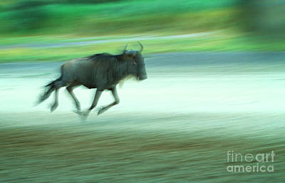 Photograph - The Chase by Scott Kemper