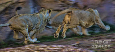 Photograph - The Chase by Steven Parker