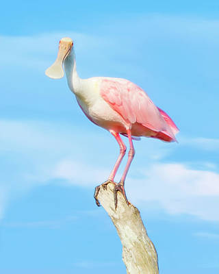 Photograph - The Cheerful Spoonbill by Mark Andrew Thomas