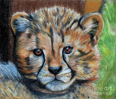 Cheetahs Drawing - The Cheetah Cub by Jill Van Iperen