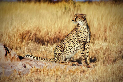 Photograph - The Cheetah by Kay Brewer