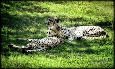 Photograph - The Cheetahs by Saija  Lehtonen