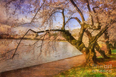 Cherry Blossom Festival Photograph - The Cherry Blossom Festival by Lois Bryan