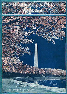 Washington Monument Drawing - The Cherry Blossoms by Rideout