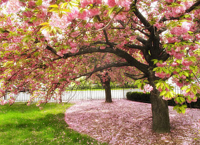Cherry Tree Photograph - The Cherry Tree by Jessica Jenney