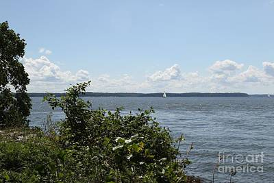 Photograph - The Chesapeake From Turkey Point by Donald C Morgan
