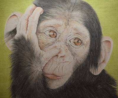 Cute Monkey Drawing - The Chimp by Biophilic Art