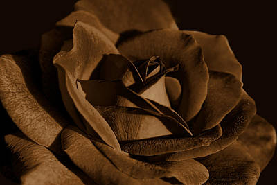 Photograph - The Chocolate Brown Rose Flower by Jennie Marie Schell