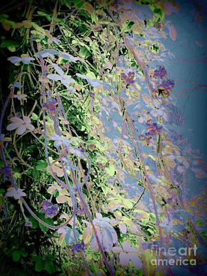 Photograph - The Chocolate Vine As An Impressionist by Nancy Kane Chapman