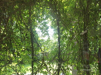 Photograph - The Chocolate Vine Curtain by Nancy Kane Chapman
