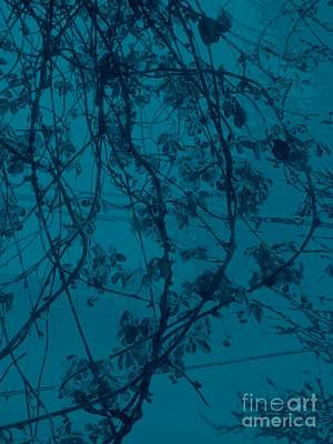 Photograph - The Chocolate Vine In Blue by Nancy Kane Chapman