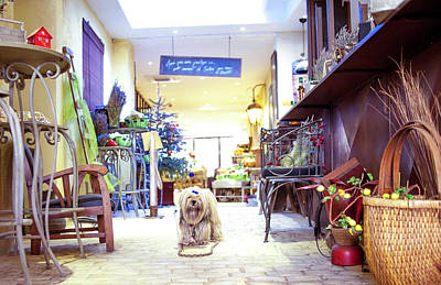 Photograph - The Chocolaterie Dog, France by Jean Gill
