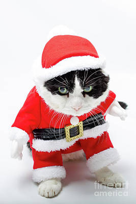 Photograph - the Christmas Cat by Benny Marty