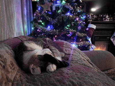 Photograph - The Christmas Cat by Victor Wiebe