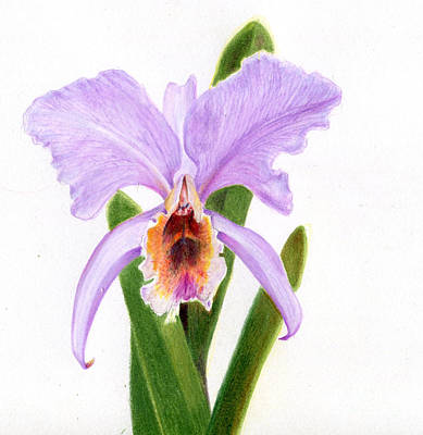 Painting - The Christmas Orchid by Penrith Goff