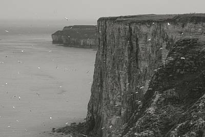 Razorbill Digital Art - The Cliffs by Ian Byrom
