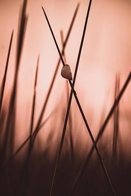 Photograph - The Climb by Chris Bordeleau