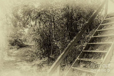Photograph - The Climb by William Norton